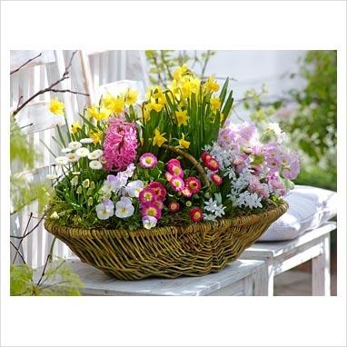 Springtime in a basket <3