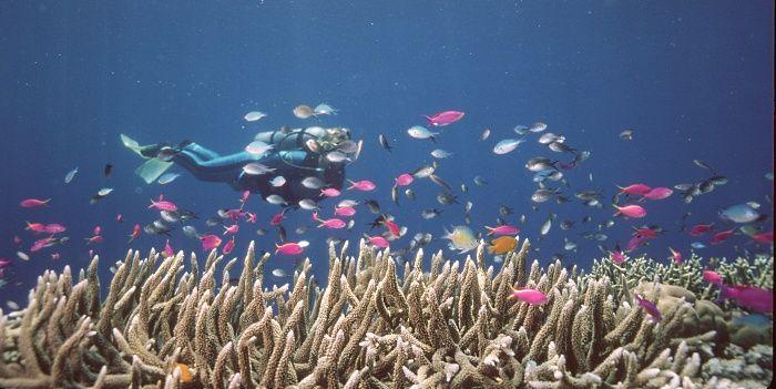 grande barreira de coral   Mergulhador nada ao lado de peixes na Grande Barreira de Corais ...