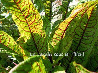 Le Jardin sous le Tilleul