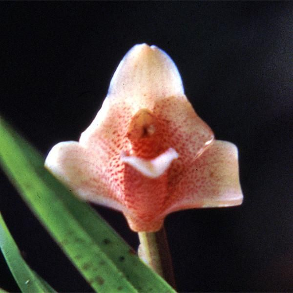 Sacred Union Sacred Plant Life Tantra