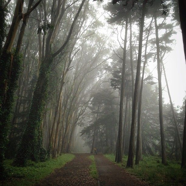 25 best photography around the presidio images on pinterest