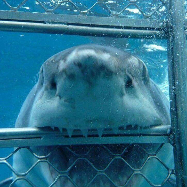 Does this cage make my teeth look big?