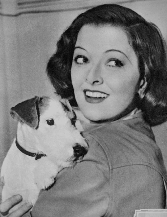 "Myrna Loy in 1939 with one of her two Wire Fox Terriers, one of which was named after her film, ""Too Hot To Handle."" If the name was accurate, this is probably the other one."