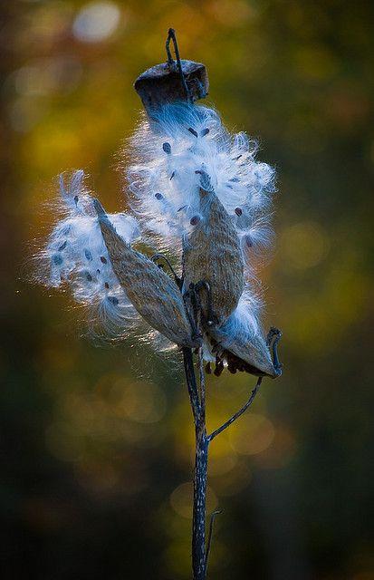 Flower's Rebirth - Beautiful Blue !