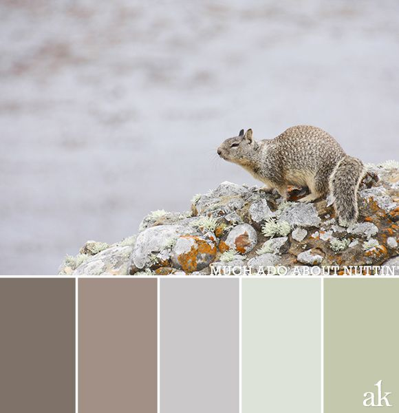 a squirrel-inspired color palette // foggy coastal light, muted brown, lavender, green