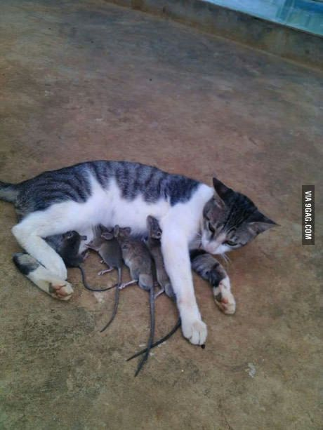 Oh my goodness! Most cats really ARE sweet!