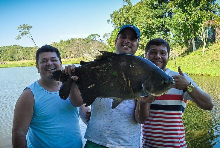 Tambaquis de 10 kgs e Dourado - pesca entre Amigos