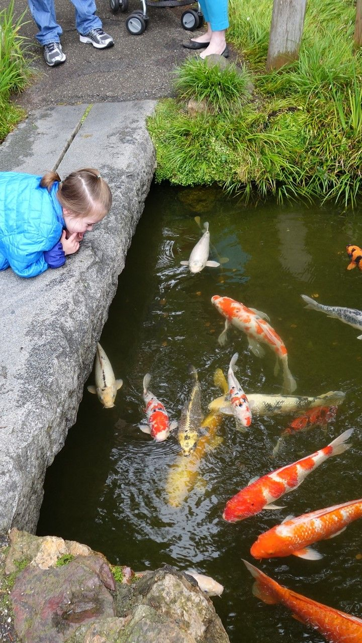 378 best koi in japanese gardens images on pinterest for Koi pond japanese tea garden san francisco