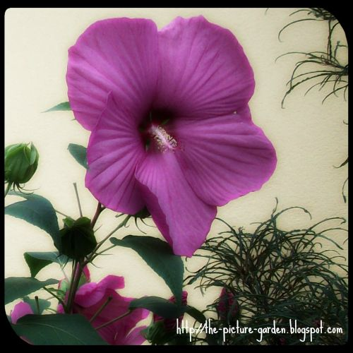 The Picture Garden: Project 365 - Day 258
