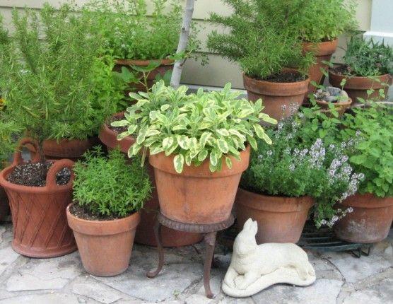 Herb Garden Container Herbs In Pots With Rabbit Statue