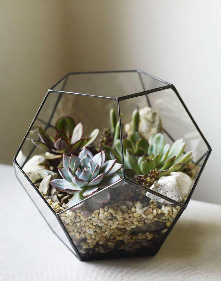 Glass dodecahedron with Senecio articulatus, Echeveria colorata, Sedum album 'Coral Carpet', Echeveria pulidonis & Echeveria nodulosa 'Painted Beauty'; Gardens Illustrated, January 2016