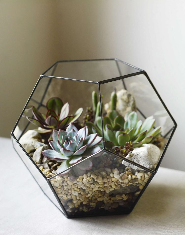 239 best images about terrariums on pinterest gardens glass houses and glass terrarium. Black Bedroom Furniture Sets. Home Design Ideas
