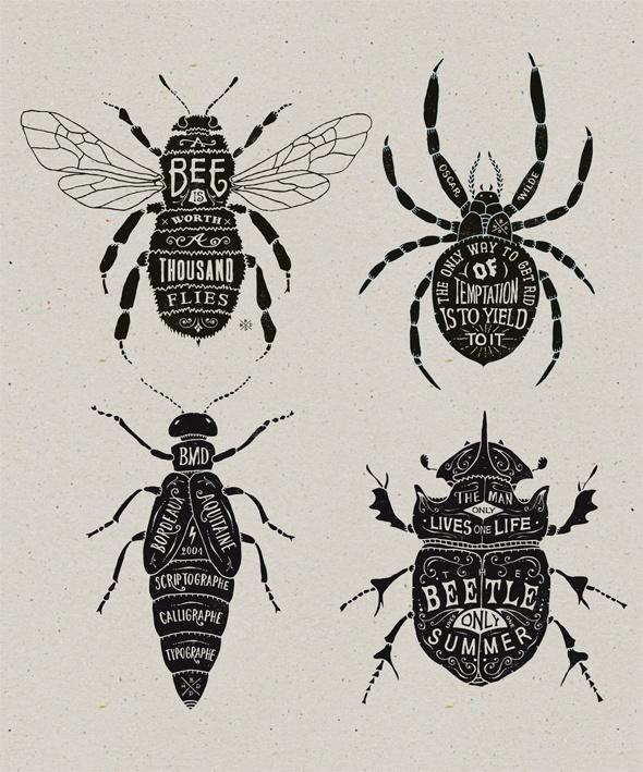 les insectes - bmd design