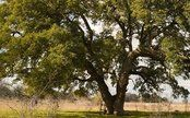 7 Fast Growing Shade Trees to Slash Your Electric Bill   Care2 Causes