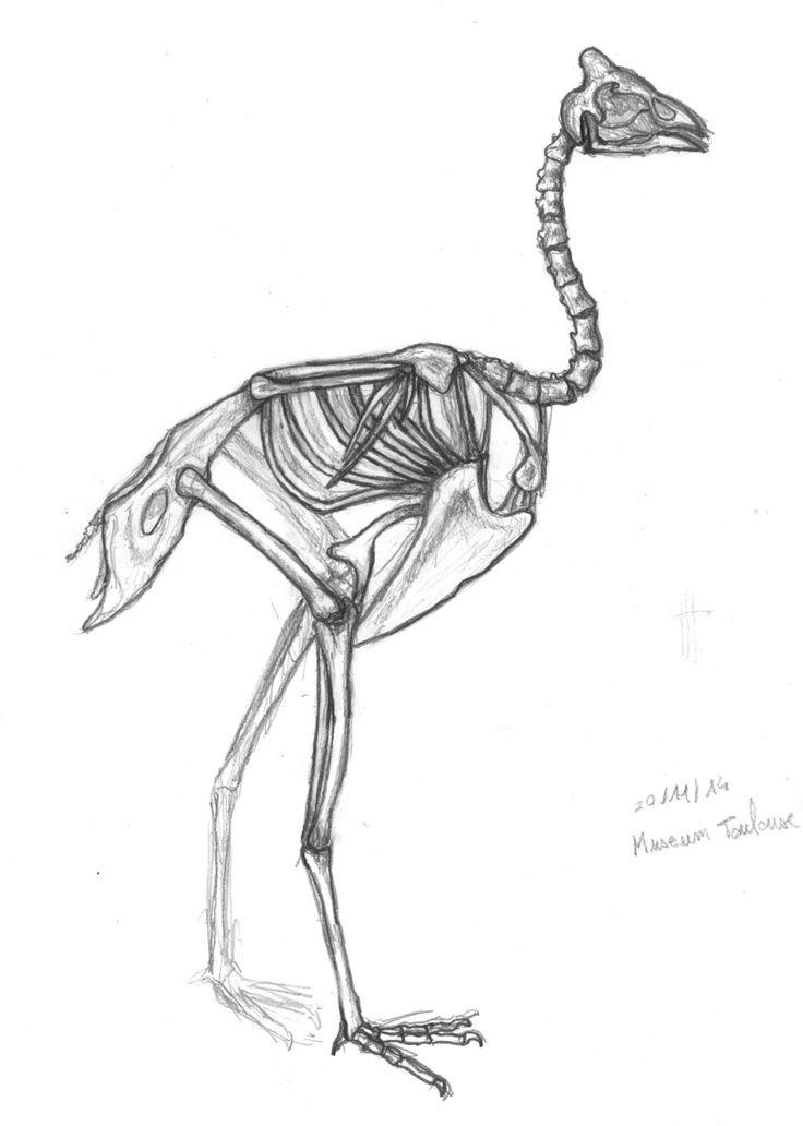 29 best Reference: Bird Anatomy images on Pinterest | Animal anatomy ...