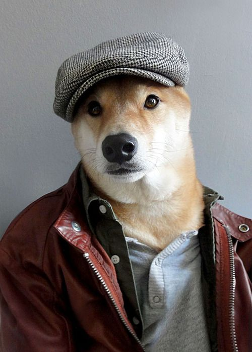 Menswear Dog Features Photos of Mens Fashion, Modeled by a Shiba Inu