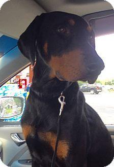 ADOPTEDHomewood, AL - Doberman Pinscher Mix. Meet Sonny, a dog for adoption. http://www.adoptapet.com/pet/15494512-homewood-alabama-doberman-pinscher-mix