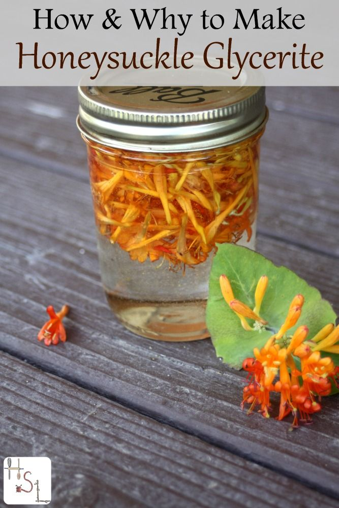 Make a honeysuckle glycerite to treat sore throats, hot flashes, and more with this super easy process.