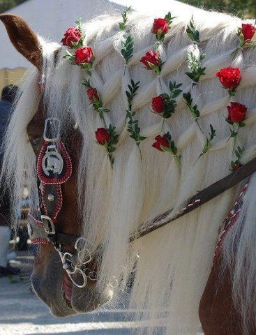There are always beautiful equestrian entries in the Rose Parade, held annually on January 1 in Pasadena, California.