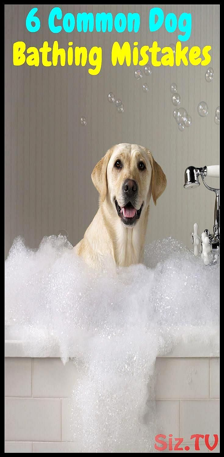 6 Common Mistakes You Make While Bathing Your Pet 6 Common