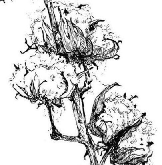 Les 13 meilleures images du tableau encre de chine sur - Branche de coton ...