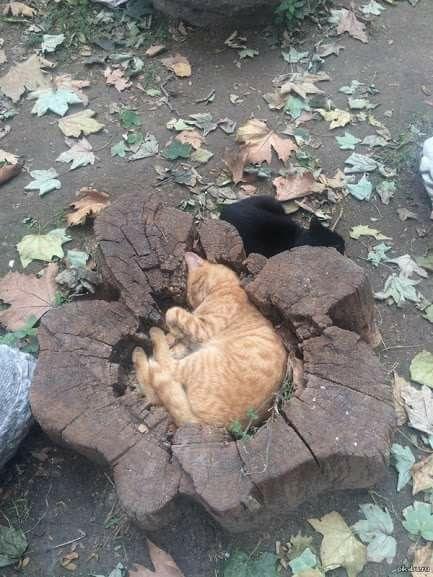 Сердце дерева