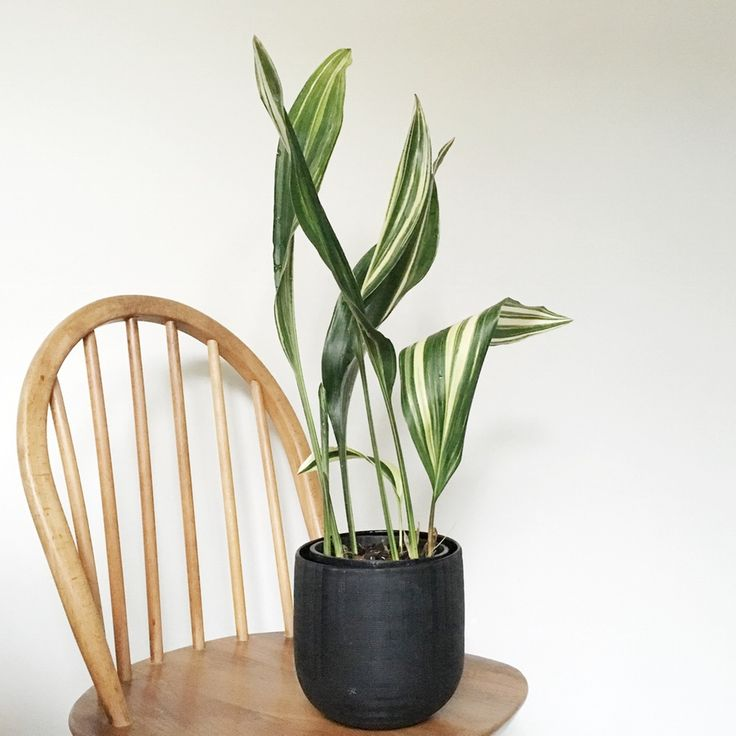 Unique Indoor Plants Care and Maintenance