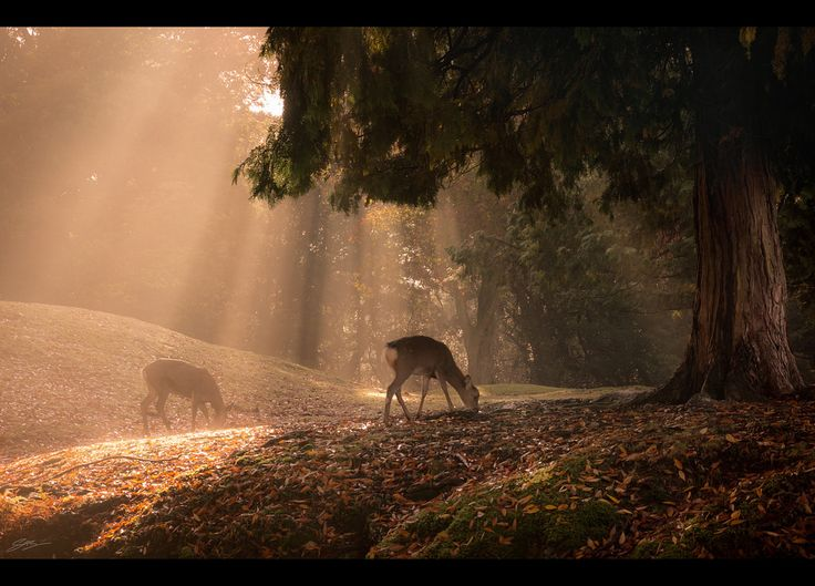 https://flic.kr/p/PHt7To | Under the Tree | A misty autumn morning in Nara, Japan  ● Sony a6000 ● E PZ 16-50mm Kit Lens   Follow me on Instagram: www.instagram.com/scottsimphotography/   All rights reserved. Please do not use any of my pictures without prior permission.