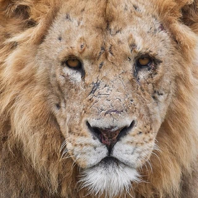 From every wound there is a scar, and every scar tells a story. A story that says, I survived. https://www.facebook.com/zambiwildliferetreat?fref=photo: