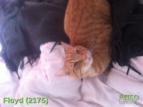 Please help us find Floyd the Cat missing in the 26E5HD area. For more details click http://j.mp/1x5OzrM