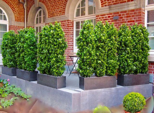 Kunstliche Ilexpflanzen Als Sichtschutz Von Bella Planta Terrassengestaltung Massanfertigung Unikat I Garten Terrasse Design Kleiner Garten Kunstpflanzen