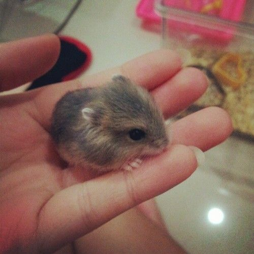 If your ever feeling down, look at pictures of teeny baby dwarf hamsters and you'll feel better