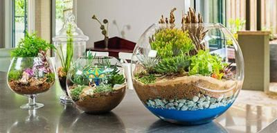 Jardines en miniatura Varios