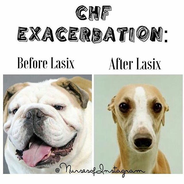 What is lasix used for in dogs