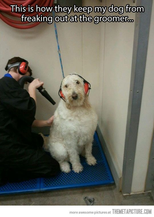 Dog grooming made easier