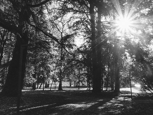 Inside the forest- Valdagno2013 @ wilderbiral iPh