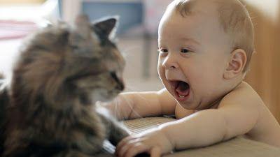 Foto HD Bayi bermain dengan kucing -downloadfotofb | Download Foto Fb HD