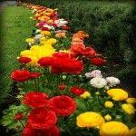 Paisajes Primaverales Hermosos Llena de Flores