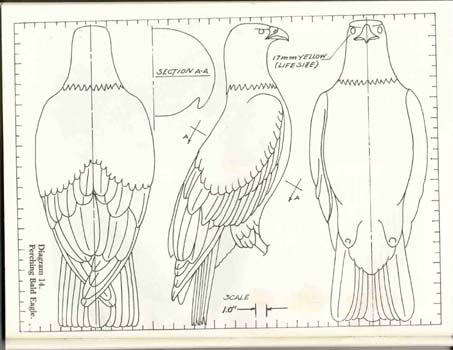 how to carve a wooden Eagle patterns chainsaw carving