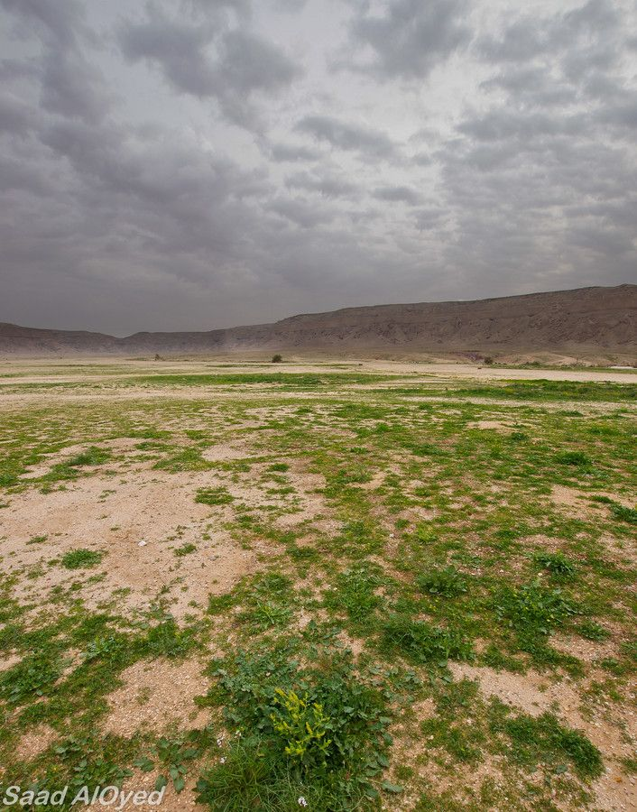 Desert turns Green ربيع منطقة الخفس, (Saudi Arabia), by Saad Al-Oyed on 500px