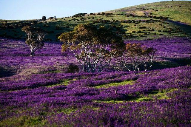 Zdjęcia: Rapid Vale, South Australia, krajobraz psychodeliczny, AUSTRALIA