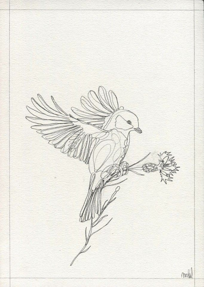 """""""Tit and cornflower"""", by AROBAL, 2014"""