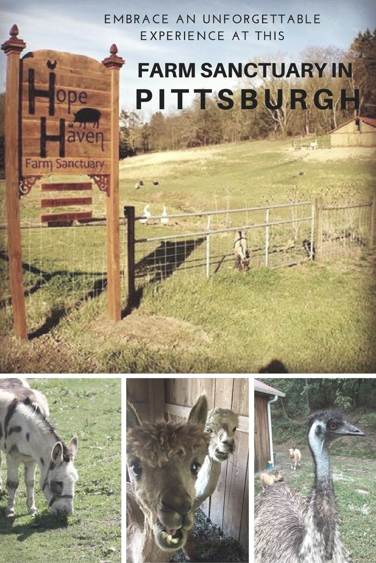220 best come visit pittsburgh images on pinterest pennsylvania
