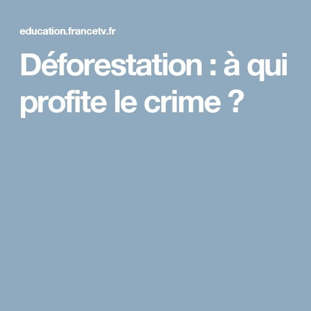 Déforestation : à qui profite le crime ?