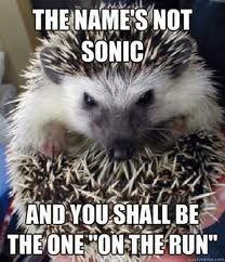 25 Adorable Hedgehog Memes
