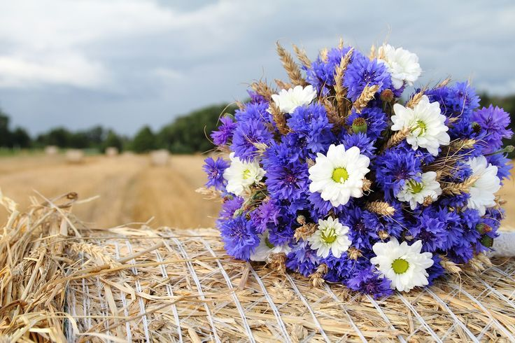 Bridesmaid bouquets? How pretty is this Cornflower bouquet? Cornflowers are in season during the summer months when they are their most affordable as a wedding flower