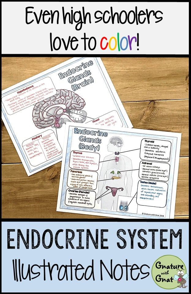 Endocrine System: Illustrated Notes & Diagrams | Biology: Human Body