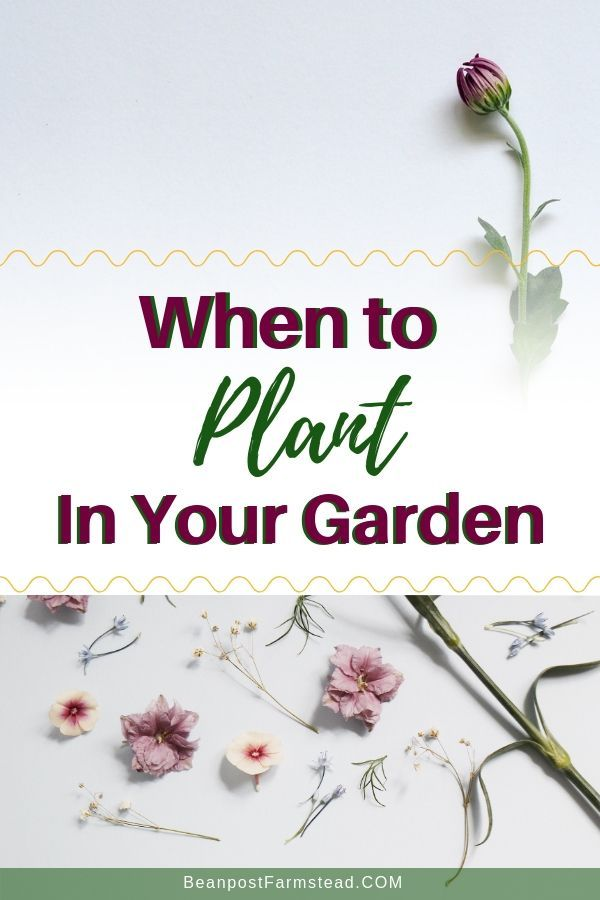 13+ When is the best time to plant a garden ideas in 2021