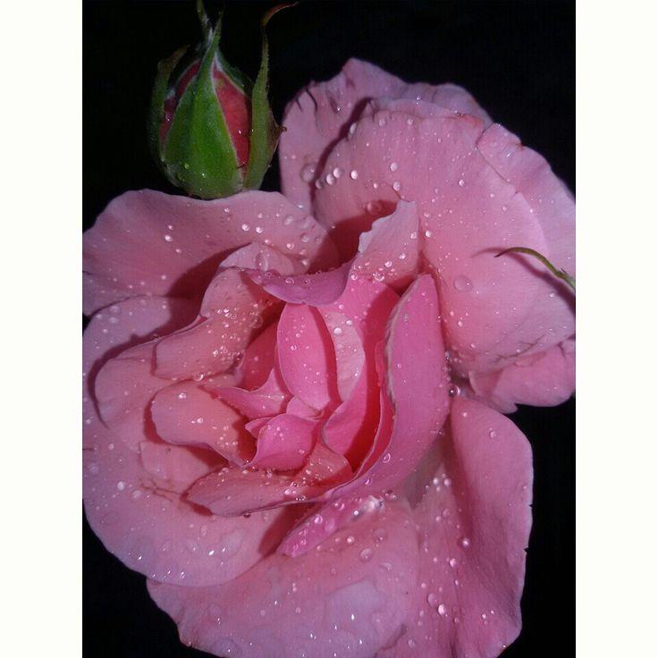 Flower nature rain petals