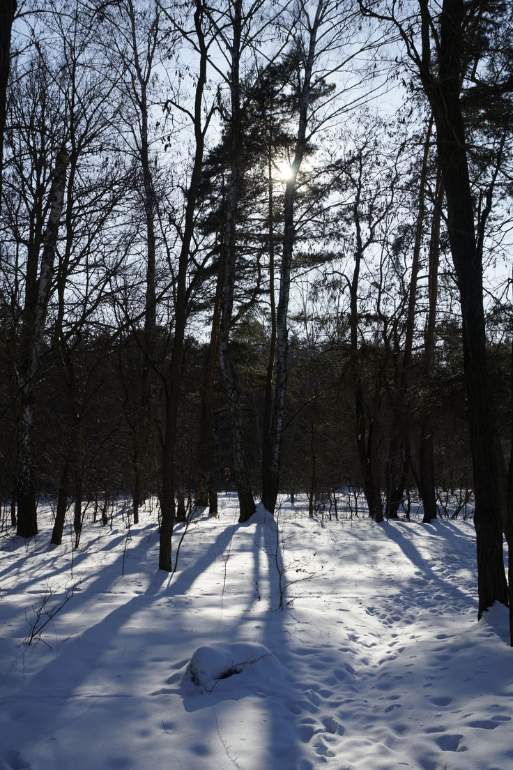 Zimowe klimaty. Las Młochowski, Polska. Fot. Jan Gołąb